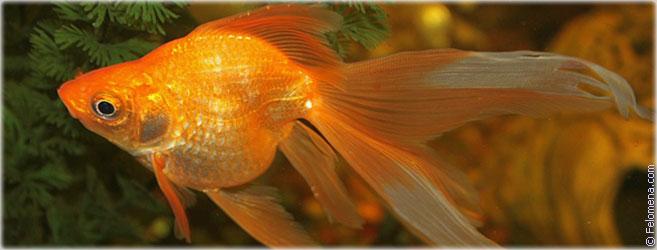 Гадание золотая рыбка 3 желания - Астро оракул