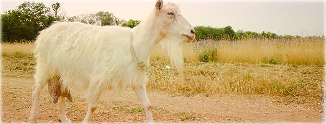 Гороскоп года Козы (Овцы) 2018 – Здоровье