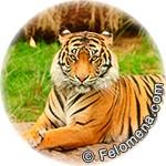 Восточный календарь животных по годам (Китайский гороскоп)