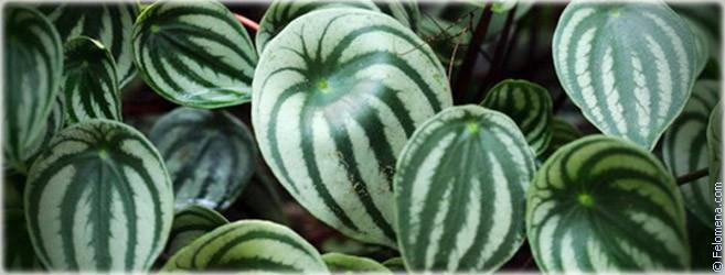 Какие комнатные растения соответствуют вашему знаку Зодиака