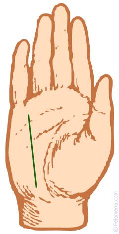 Линия здоровья (Меркурия) на руке ✋ человека: значение, описание, фото