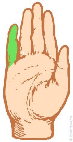 Хиромантия: ☝ мизинец (палец Меркурия)