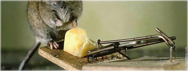 от мышей