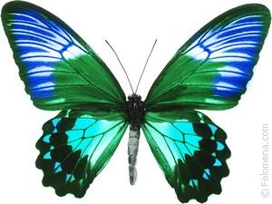Примета Бабочка