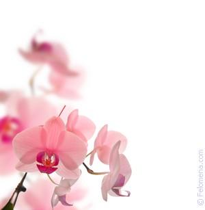 Примета Цветы