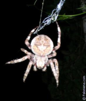 подскальзывается падая, примета увидеть вечером большого паука выпускается как