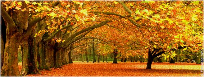 Приметы в сезоне Осень