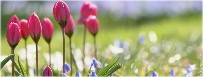 Приметы в сезоне Весна