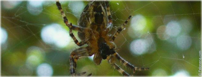 Нельзя убивать пауков