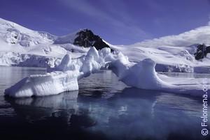 Сонник Антарктида