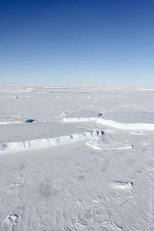 Сонник Антарктика