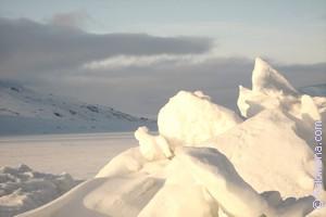 Сонник Арктика