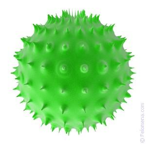 Сонник Бактерия