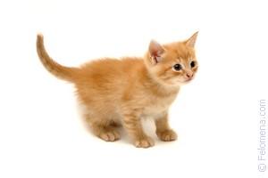 Смотреть К чему снится: котята во сне женщине видео