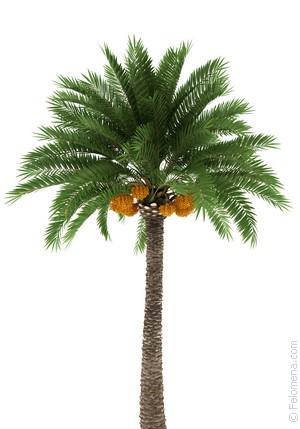 Картинки по запросу пальма