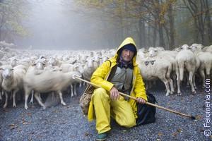Сонник Пастух