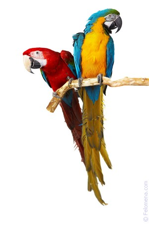 Сонник Попугай