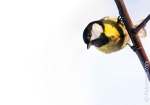 Сонник Птица