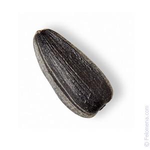 Сонник Семя