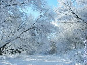 Сонник Снегопад