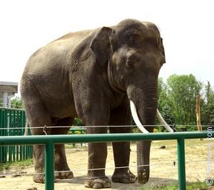 Сонник Зоопарк