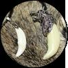 Амулет «Клык Волка»